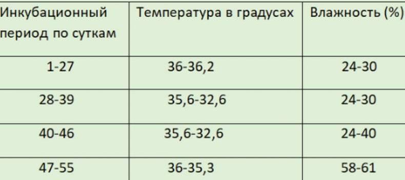 ᐉ инкубация индюшиных яиц в домашних условиях - zooon.ru