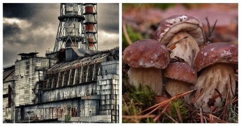Как правильно искать и собирать грибы в лесу - 7 народных примет - четыре вкуса - медиаплатформа миртесен