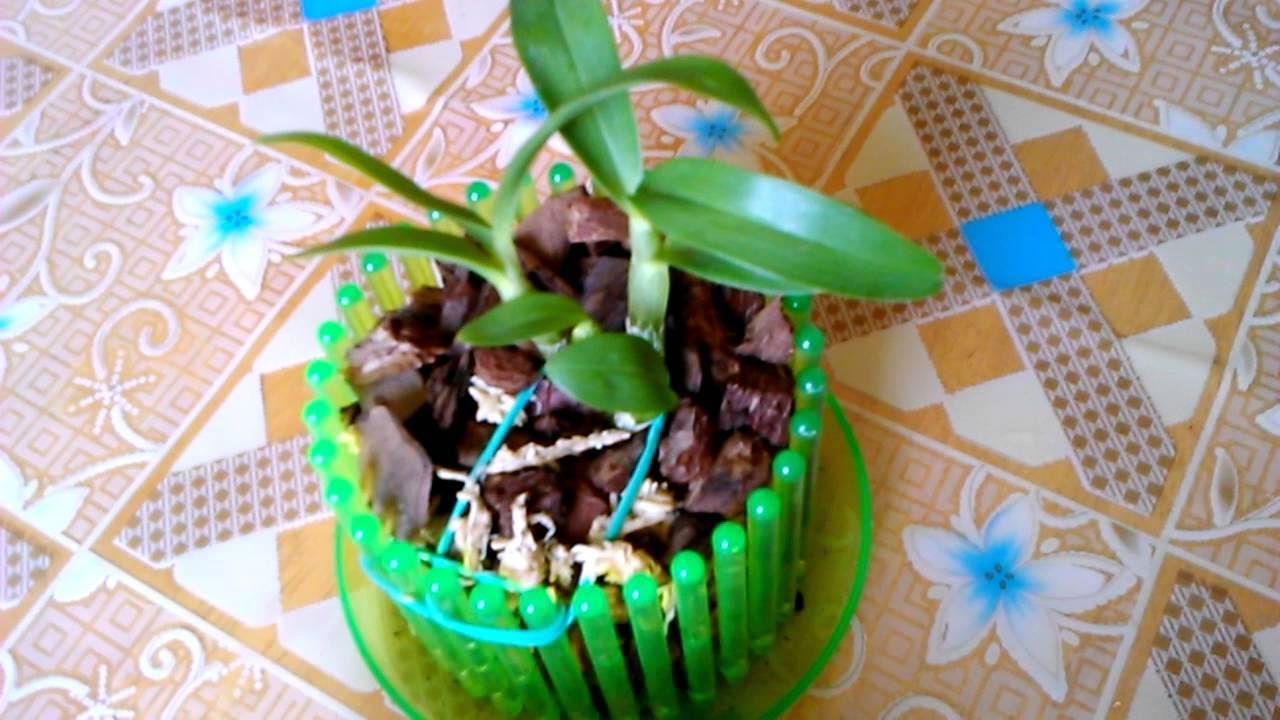 Прозрачный горшок для орхидеи: обязательно ли нужно сажать растение именно в такую ёмкость и для чего, можно ли выбрать пластиковый вариант или нет и почему? selo.guru — интернет портал о сельском хозяйстве