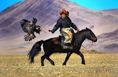 Монгольская лошадь: отличительные черты, уход и использование