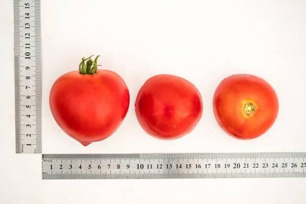 Описание сорта томата касамори и его характеристика