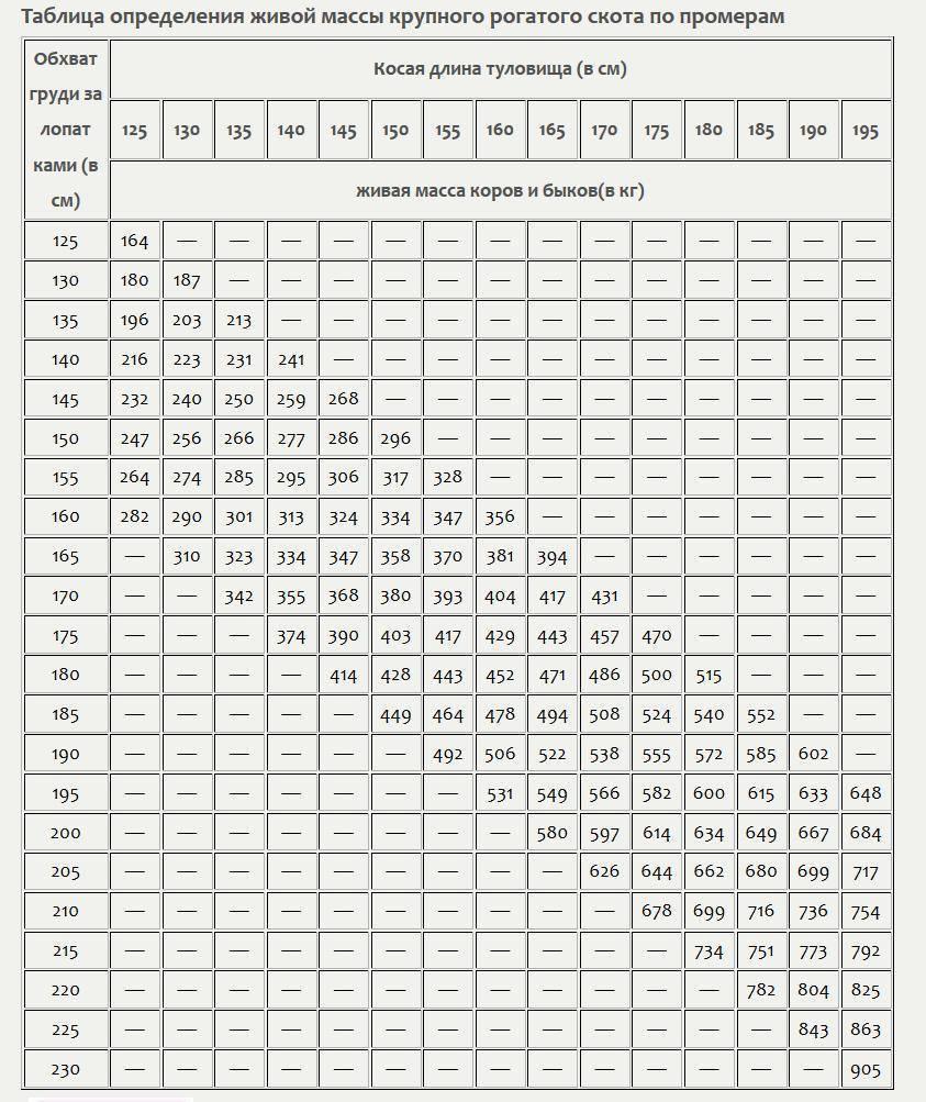 Как узнать вес теленка весы для телят - oozoo.ru