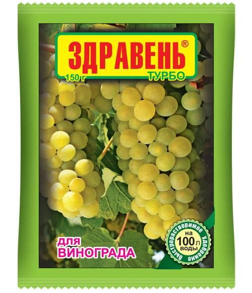 Как обрезать виноград изабелла. правила обрезки винограда