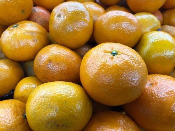 Сколько существует сортов мандарина и как они называются