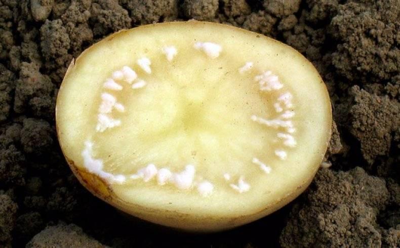 Гниль картофеля: кольцевая, бурая, сухая — selok.info