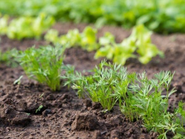Как посадить морковь с помощью ячейки для яиц