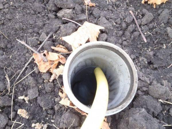 Уход за виноградом осенью: обрезка, полив, укрытие и многое другое   огородники