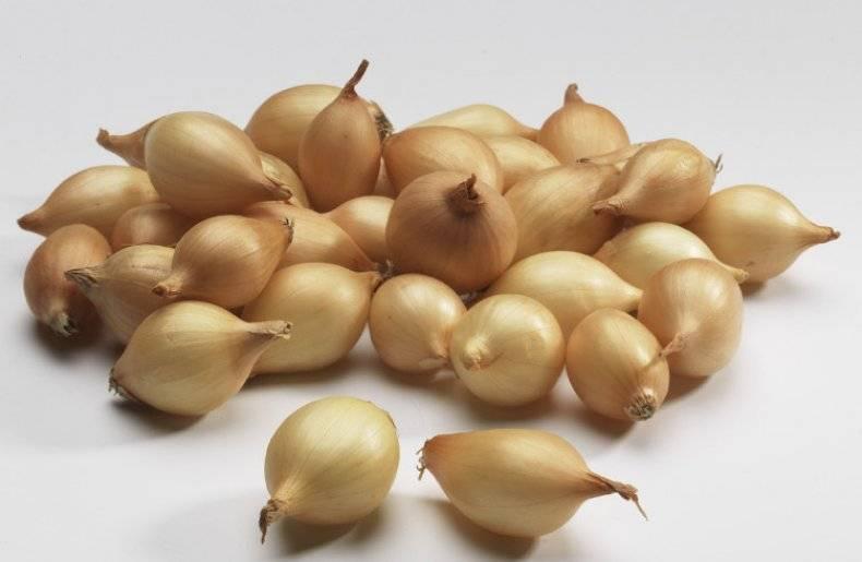 Лучшие сорта лука севка для посадки в открытом грунте