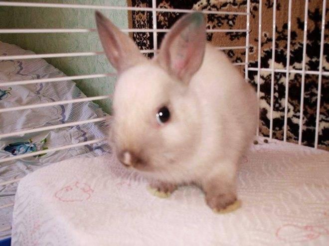Что делать, если у кроликов сопли, насморк и чиханье?