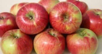 Описание сорта яблони слава победителям: фото яблок, важные характеристики, урожайность с дерева