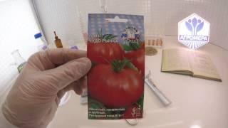 Описание сорта томата моравское чудо, его характеристики и особенности выращивания