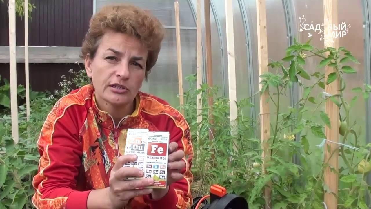 Почему желтеют листья томатов? рассмотрим причины пожелтения листвы томатов в теплице и в открытом грунте, а также необходимые меры по устранению пожелтения листьев