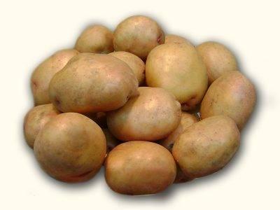 Картофель бриз: характеристика и описание сорта, фото картошки, отзывы о её преимуществах и недостатках