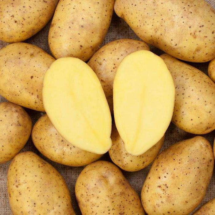 Картофель зекура: характеристика и описание сорта, фото, отзывы