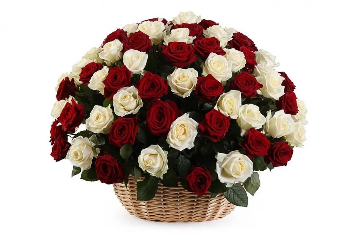 Размножение роз черенками: лучшие способы укоренения черенков роз в саду и дома размножение роз черенками: лучшие способы укоренения черенков роз в саду и дома