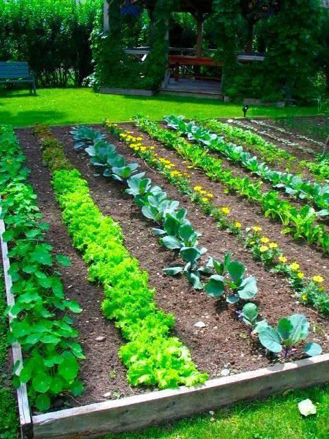 Совместимость растений в саду и огороде. совместимость растений - хорошее соседство в саду и огороде. | дачная жизнь