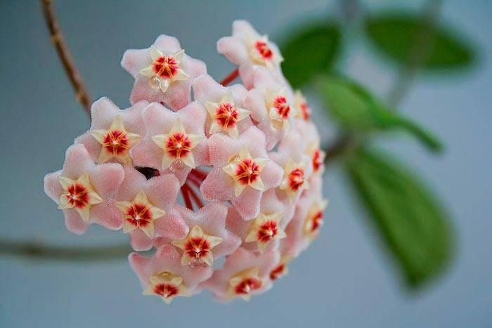 Орхидея: приметы, можно ли держать дома, особенно женщинам, к чему цветет и другие народные суеверия, связанные с этим растением