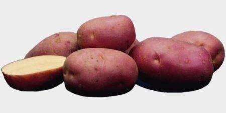Картофель лабелла: характеристика и описание сорта, фото, отзывы