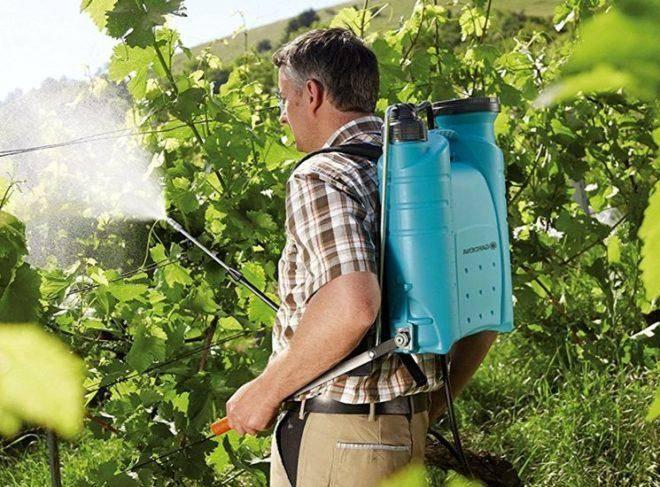 Как применять железный купорос для винограда?