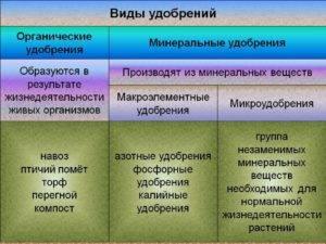 Органические удобрения: основные виды и особенности