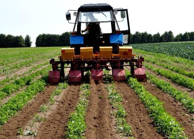 Выращивание картофеля: технология возделывания, условия посадки, тонкости ухода за овощем в открытом грунте и теплице, а также советы, как получить хороший урожай русский фермер