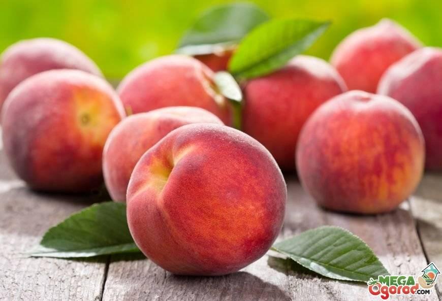 Персики: сорта для крыма, кубани, для средней полосы россии и подмосковья с фото и описанием