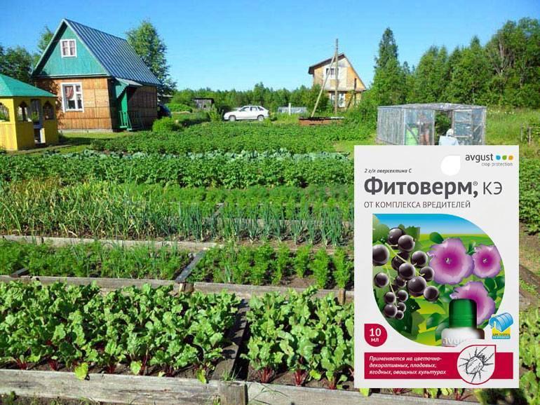 Фитоверм для комнатный растений: полная инструкция по применению