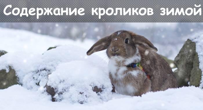 Как зимой поить кроликов: вода, значение для кроликов