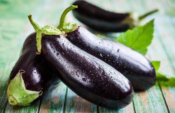 Особенности выращивания баклажан в теплице