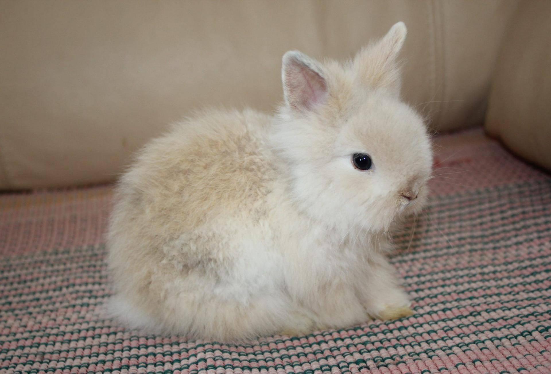 Продолжительность жизни декоративных кроликов - что влияет?