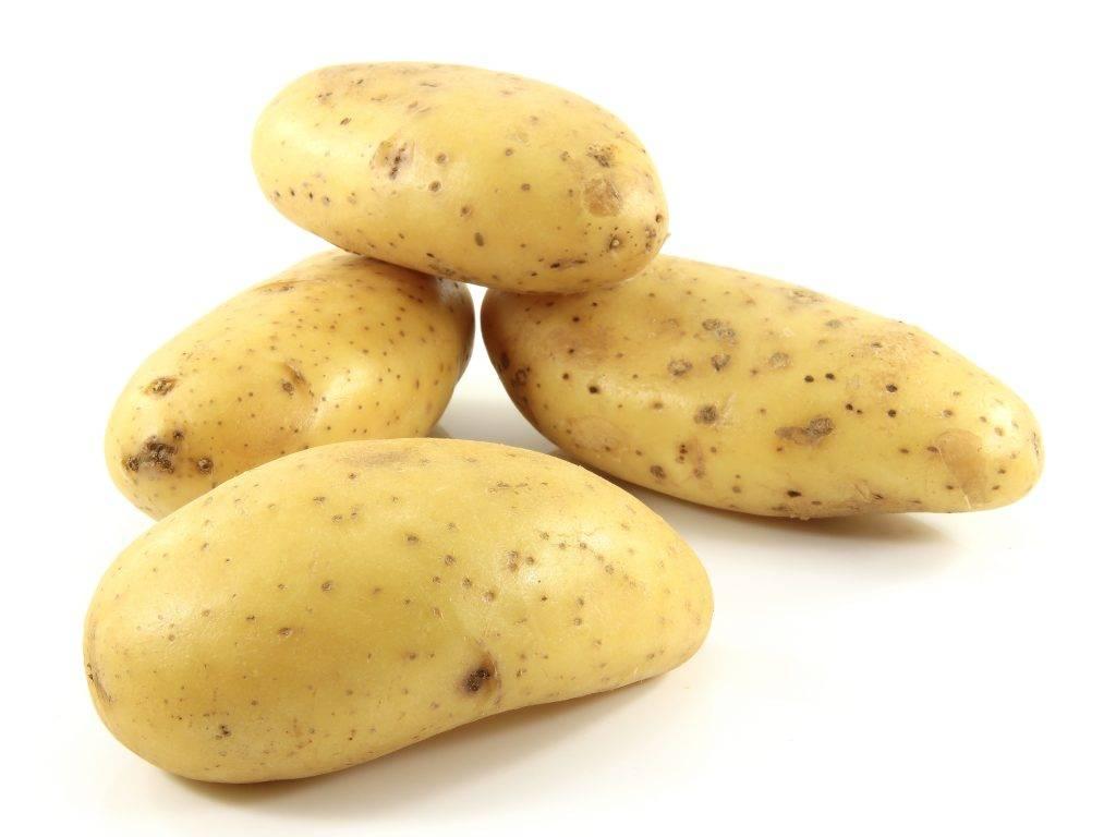 Картофель ред фэнтези – описание сорта, фото, отзывы
