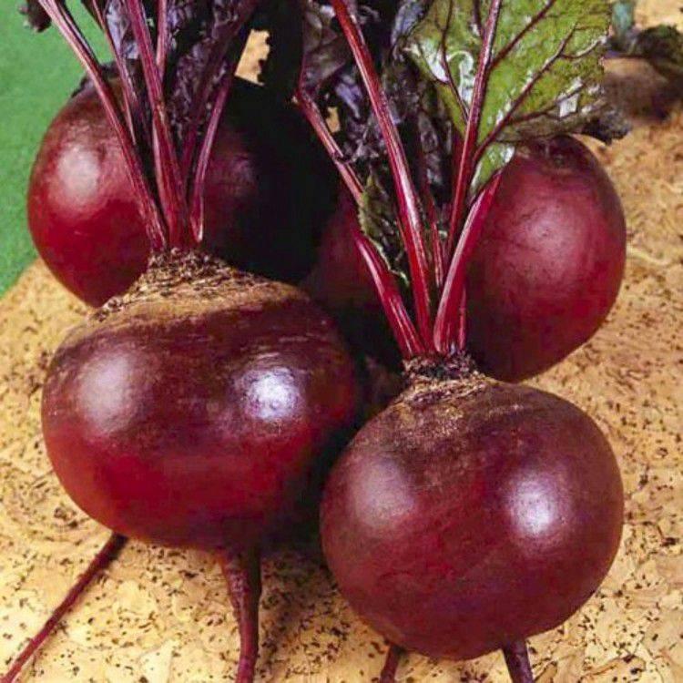 Обзор лучших сортов семян свеклы для хорошего урожая