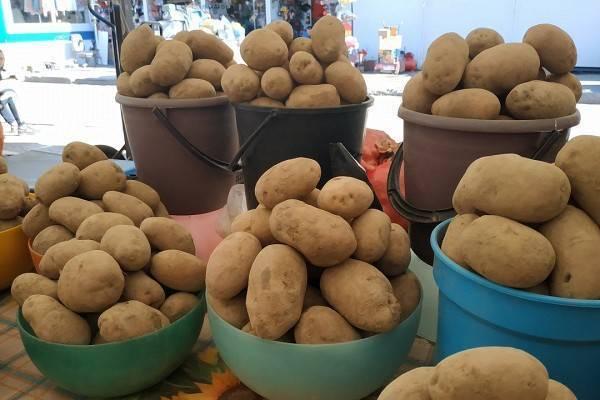 Как хранить картофель в квартире зимой и летом: рекомендации