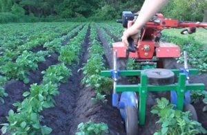 Обработка картофеля мотоблоком, видео – прополка картошки