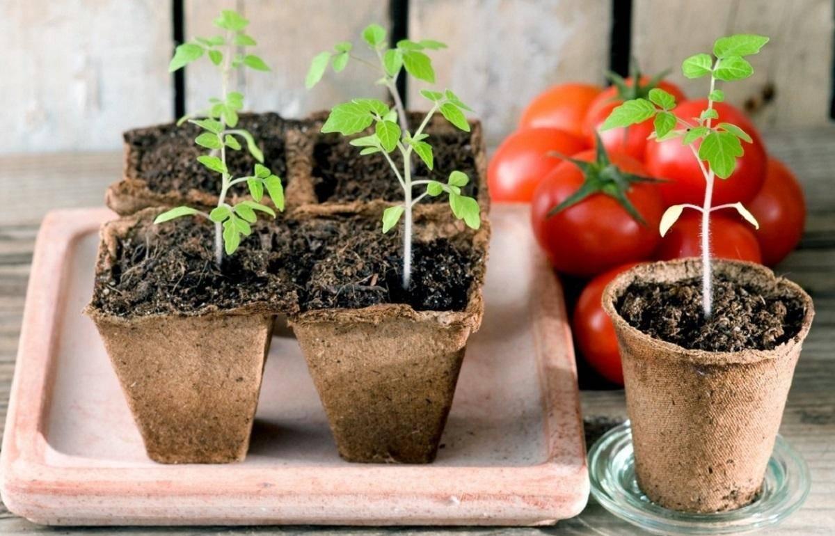 Когда сажать томаты на рассаду в 2020 году в подмосковье, сибири
