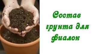 Как сажать фиалки: выбор грунта и горшка, правила посадки - sadovnikam.ru
