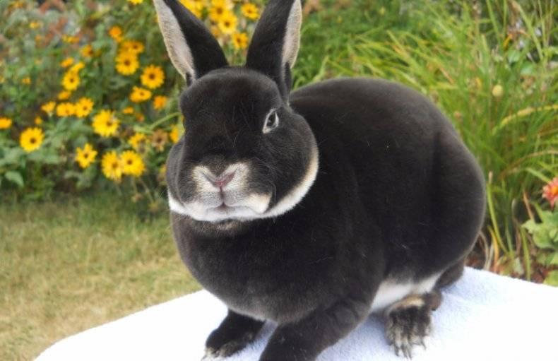 Названия и фото пород кроликов: декоративных, мясных и пуховых для домашнего разведения