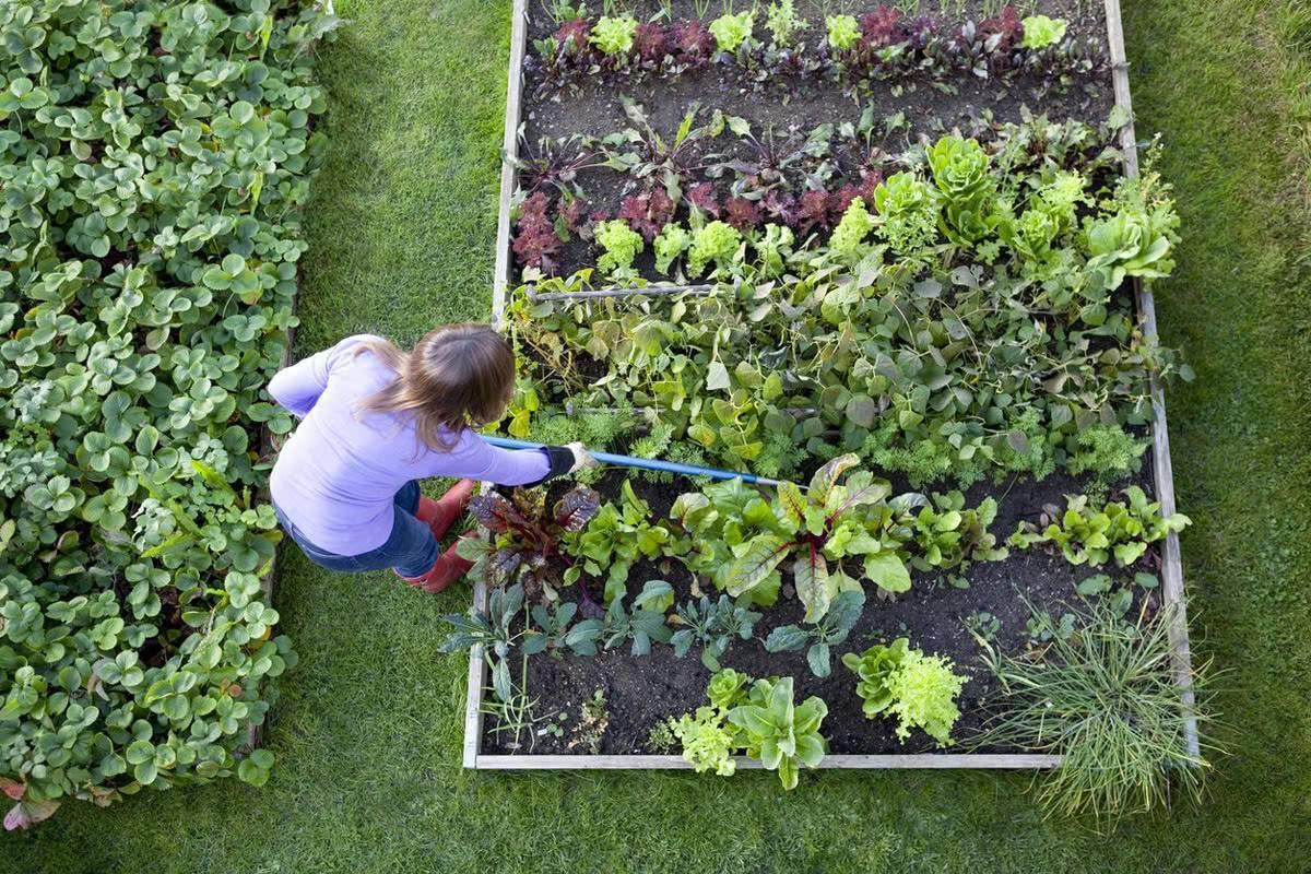 Народные средства от сорняков, как уничтожить сорняки