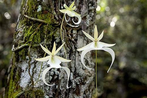 Необычные орхидеи: фото и характеристика самых редких представителей с разнообразным окрасом и удивительной формой русский фермер