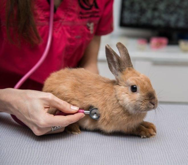 Дитрим - инструкция по применению в ветеринарии для животных и птиц