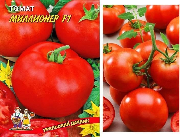 Когда нужно сажать помидоры на рассаду