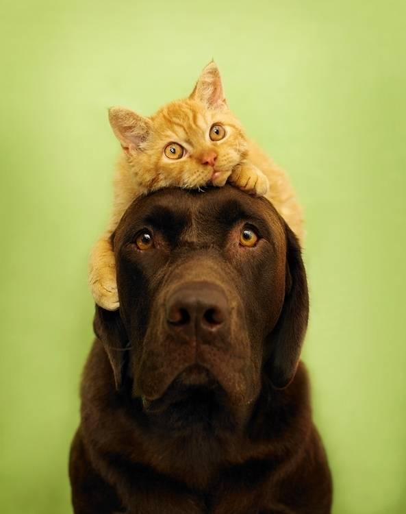 Уживется ли хорек с кошкой или собакой