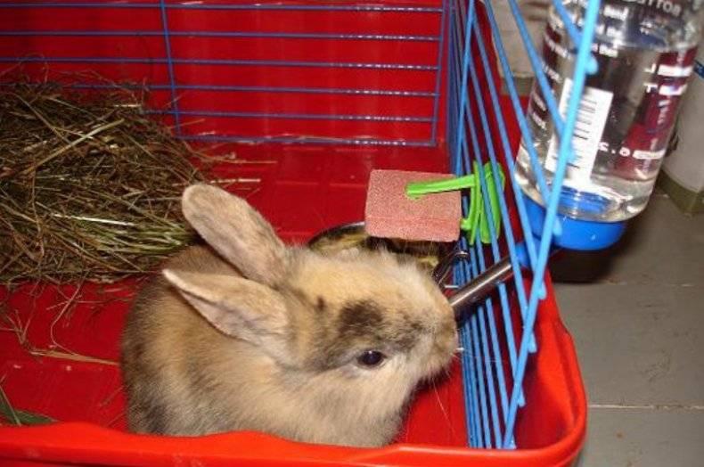 Разведение кроликов для начинающих — породы, уход, получение потомства. фото — ботаничка.ru