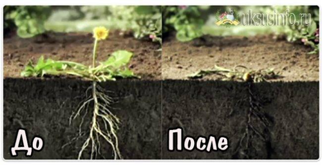 Средство от сорняков с уксусом: высокоэффективные рецепты смесей, правила уничтожения