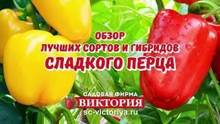 Выбираем сорта перца для Ленинградской области