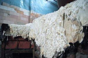 Выделка шкуры козы в домашних условиях: советы для начинающих