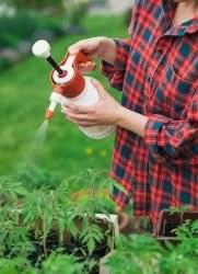 ✅ чем опрыскать помидоры от болезней, когда лучше опрыскивать томаты: утром или вечером - tehnomir32.ru