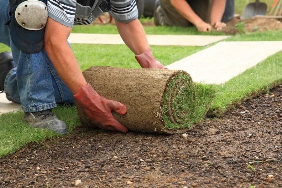 Как правильно посадить газонную траву своими руками