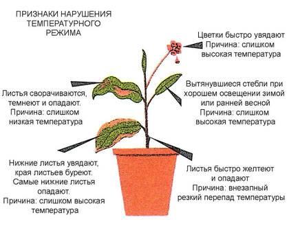 Уход за комнатными растениями: ошибки которые легко избежать