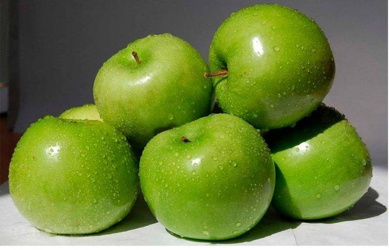 Описание сорта яблони симиренко: фото яблок, важные характеристики, урожайность с дерева